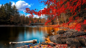 red-autumn-leaves-water